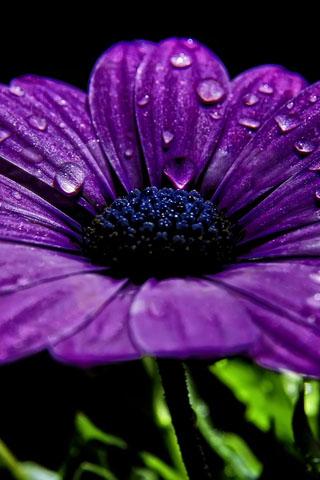 Скачать картинки на телефон цветы и букеты - самые прекрасные 9
