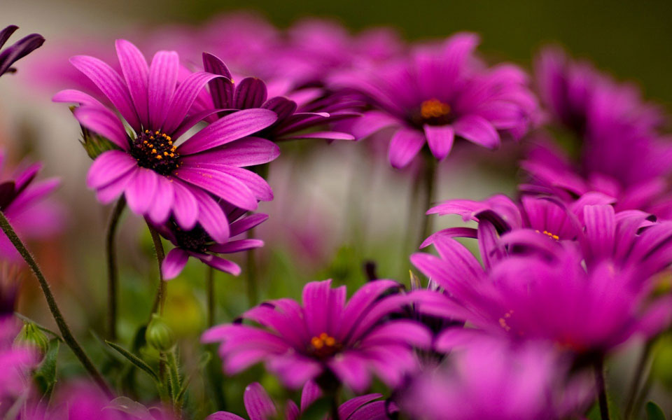 Цветочки-картинки-прикольные-и-красивые---интересная-сборка-1