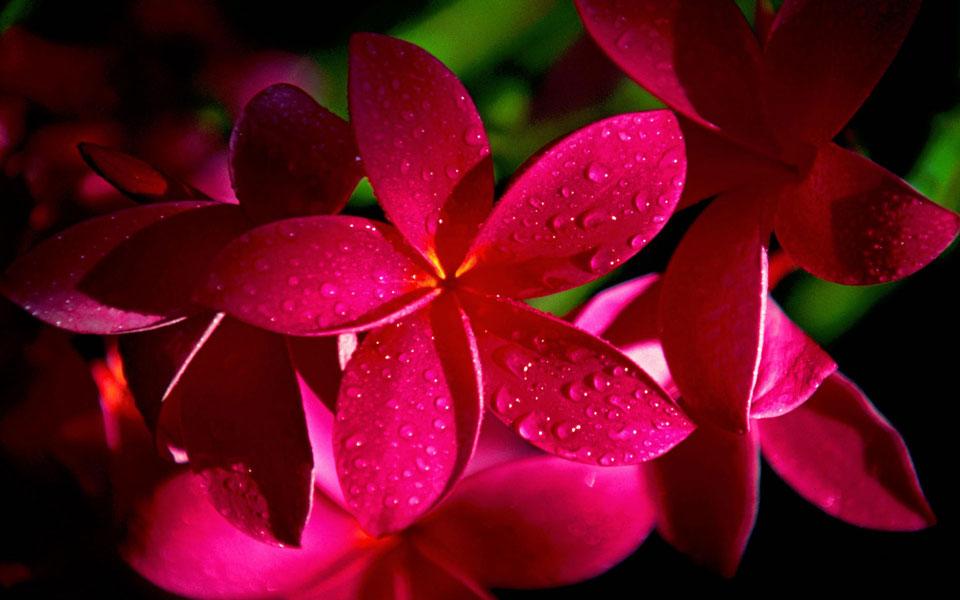 Цветочки-картинки-прикольные-и-красивые---интересная-сборка-12