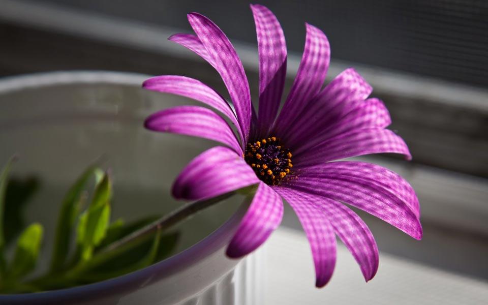 Цветочки-картинки-прикольные-и-красивые---интересная-сборка-5