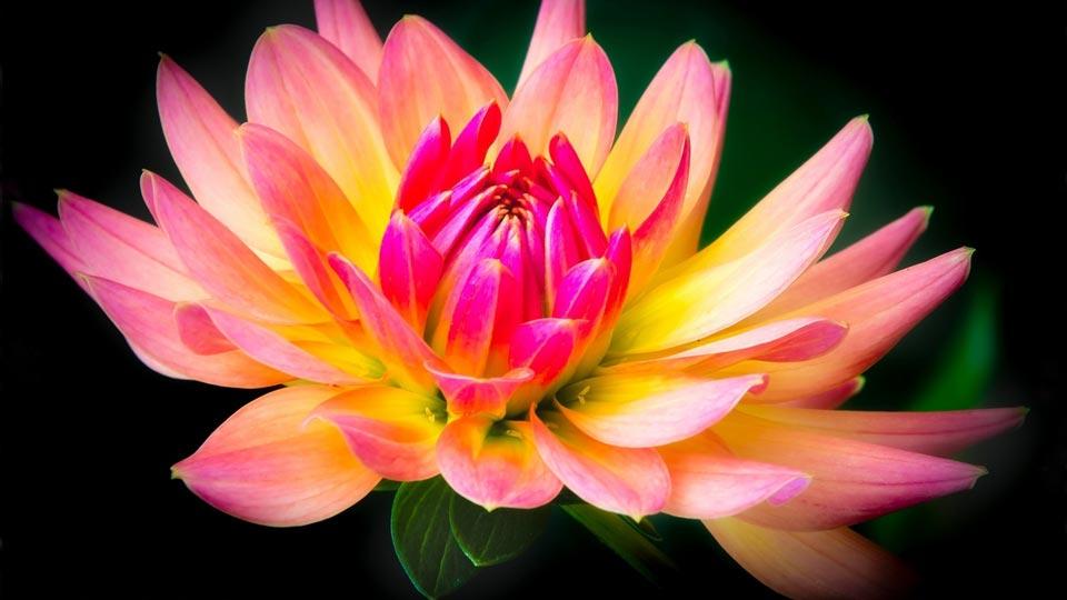 Цветочки-картинки-прикольные-и-красивые---интересная-сборка-8