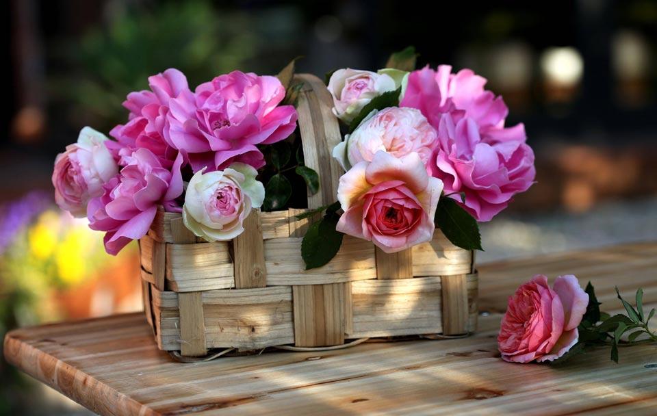 Цветочки-картинки-прикольные-и-красивые---интересная-сборка-9