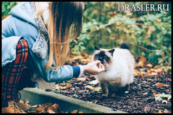 Чем побаловать кошку - ценные и приятные лакомства для животного 1
