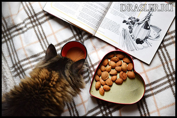 Чем побаловать кошку - ценные и приятные лакомства для животного 2