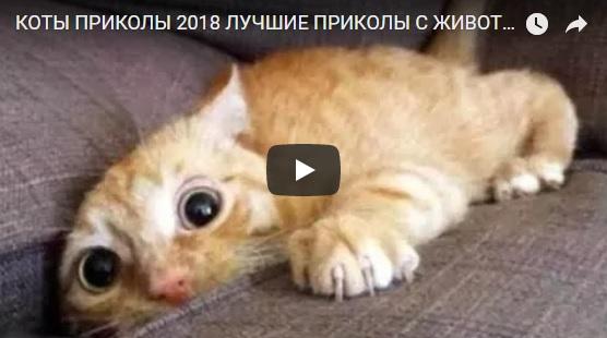 Смешные видео про кошек и котиков 2018 - забавная нарезка