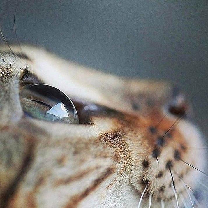 Красивые картинки глаз на аву и аватарку для девушек - подборка 5