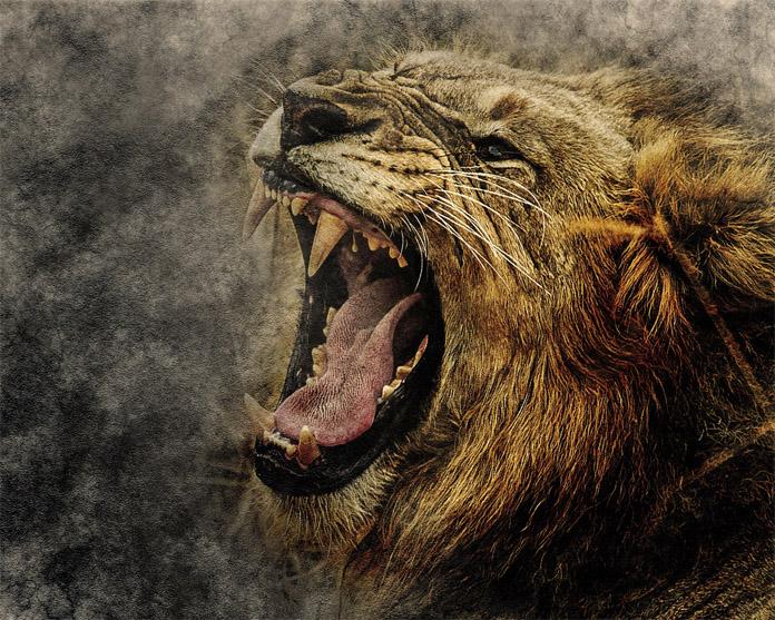Прикольные и красивые картинки льва и львов - сборка изображений 3