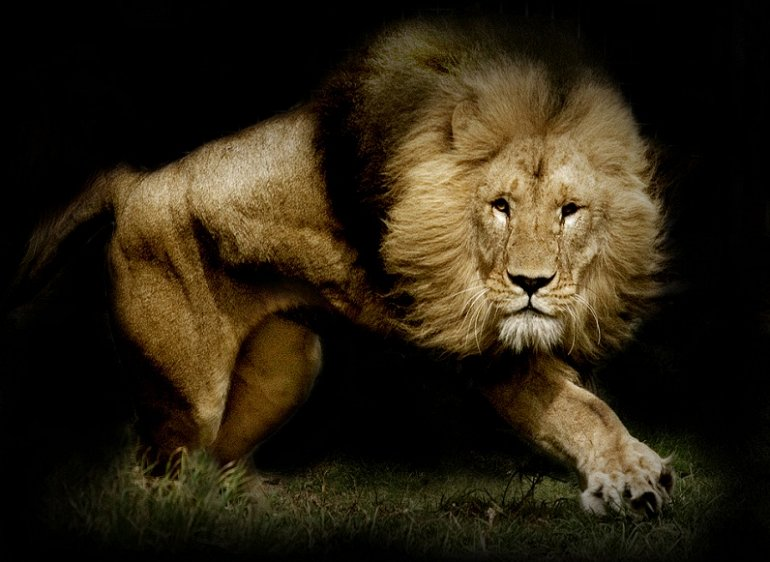 Прикольные и красивые картинки льва и львов - сборка изображений 4