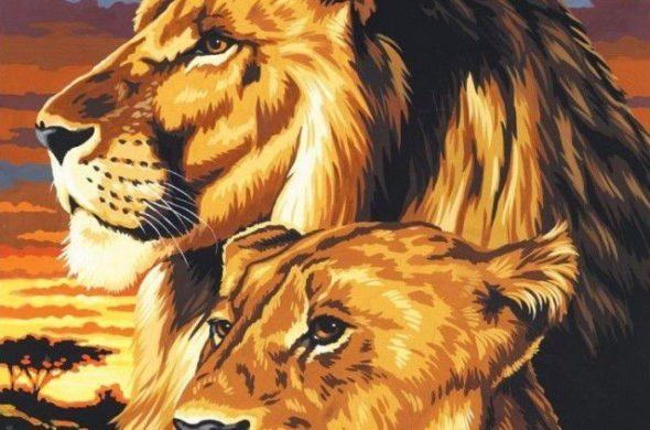 Прикольные и красивые картинки льва и львов - сборка изображений 5