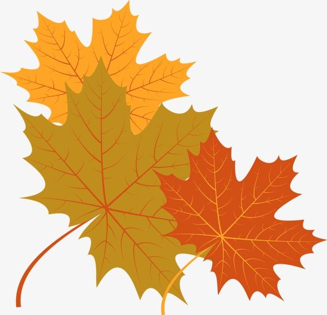 Рисунки и картинки листьев деревьев для детей - красивая подборка 10