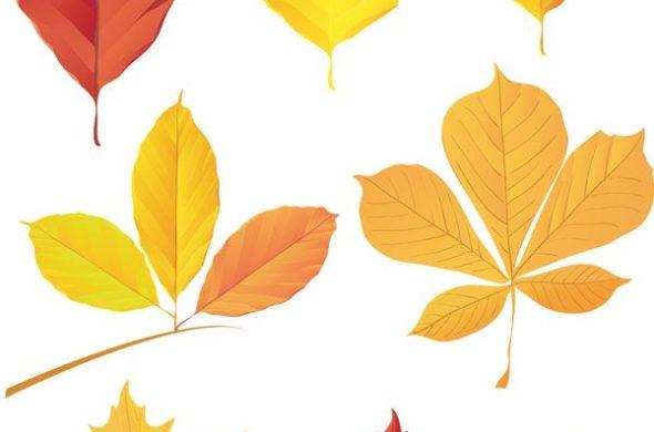 Рисунки и картинки листьев деревьев для детей - красивая подборка 12