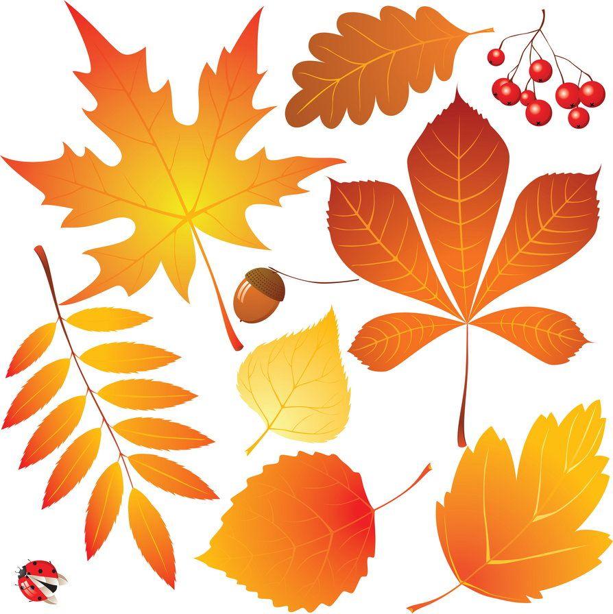 Рисунки и картинки листьев деревьев для детей - красивая подборка 3