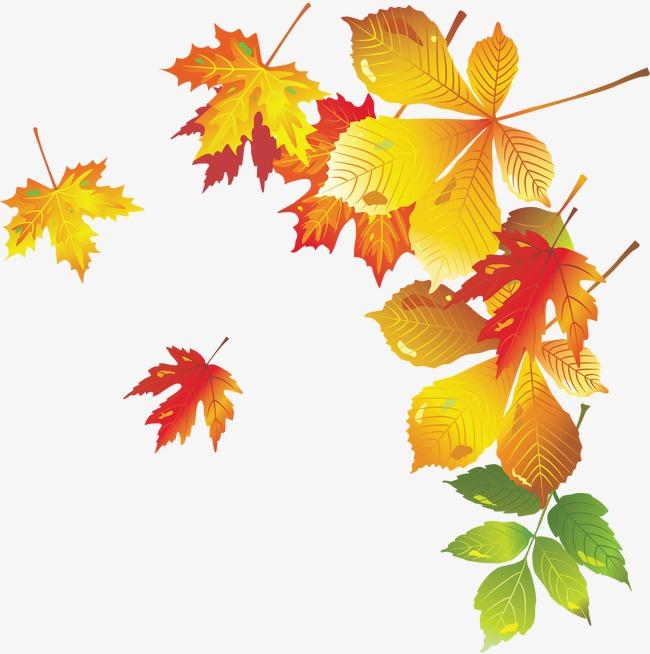 Рисунки и картинки листьев деревьев для детей - красивая подборка 5