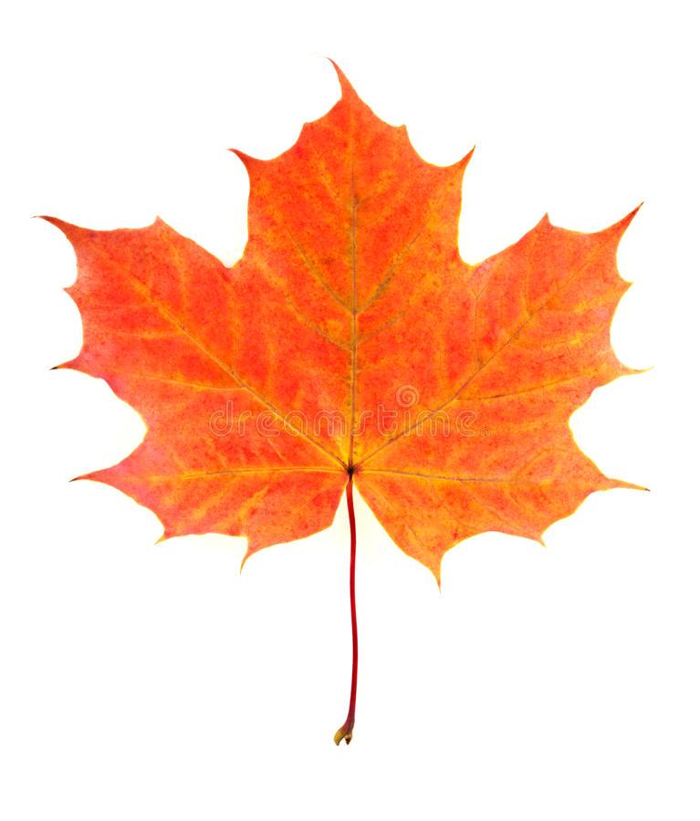 Рисунки и картинки листьев деревьев для детей - красивая подборка 6