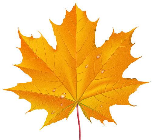 Рисунки и картинки листьев деревьев для детей - красивая подборка 7
