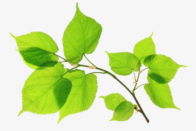 Рисунки и картинки листьев деревьев для детей - красивая подборка 8