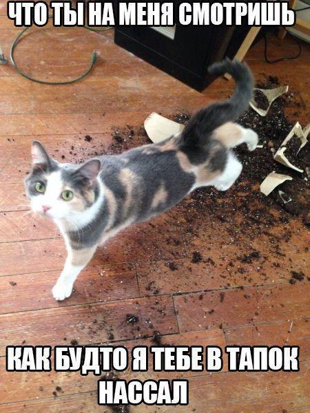 Смешные картинки про котов с надписями - веселая нарезка 10