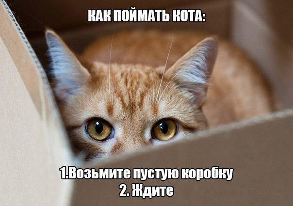 Смешные картинки про котов с надписями - веселая нарезка 11