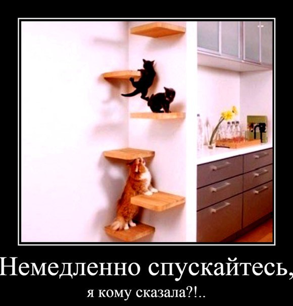 Смешные картинки про котов с надписями - веселая нарезка 12
