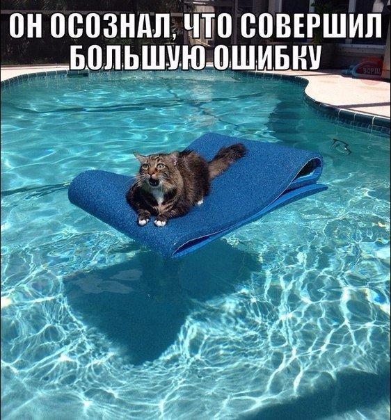 Смешные картинки про котов с надписями - веселая нарезка 13