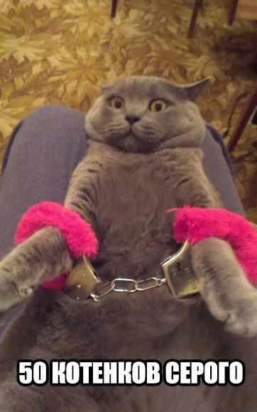 Смешные картинки про котов с надписями - веселая нарезка 14