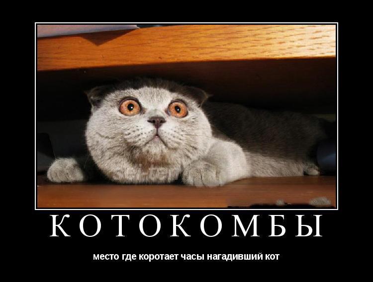 Смешные картинки про котов с надписями - веселая нарезка 15