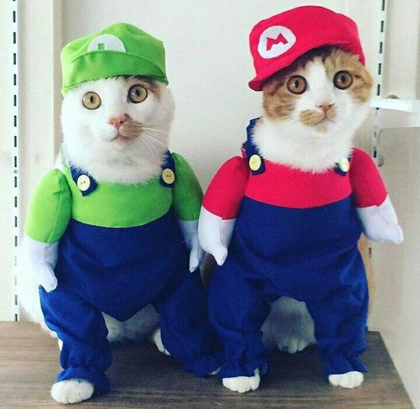 Смешные картинки про котов с надписями - веселая нарезка 16