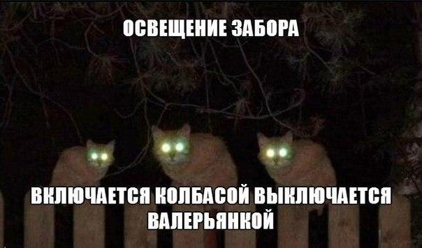 Смешные картинки про котов с надписями - веселая нарезка 17