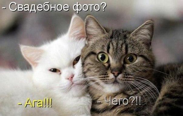 Смешные картинки про котов с надписями - веселая нарезка 2