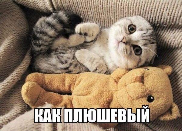 Смешные картинки про котов с надписями - веселая нарезка 3