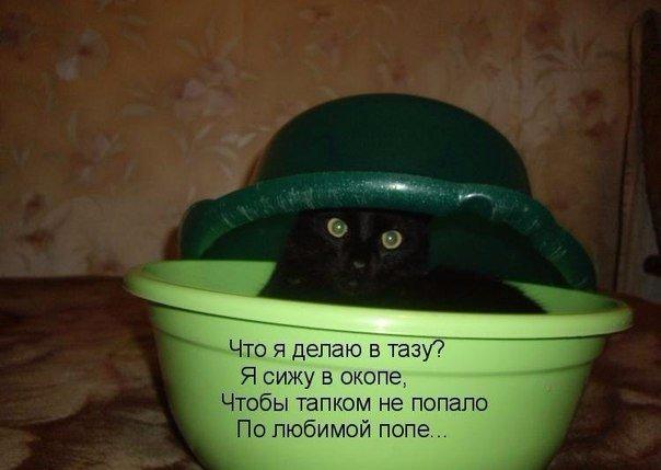 Смешные картинки про котов с надписями - веселая нарезка 4