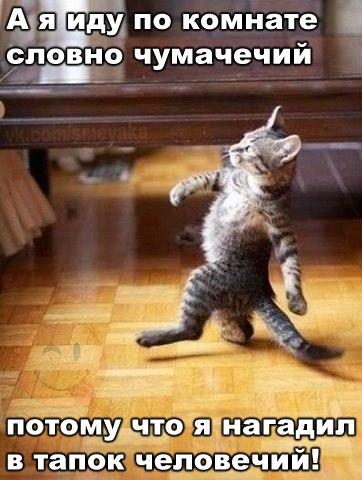 Смешные картинки про котов с надписями - веселая нарезка 5