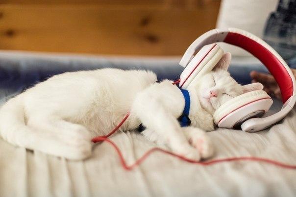 Смешные картинки про котов с надписями - веселая нарезка 6