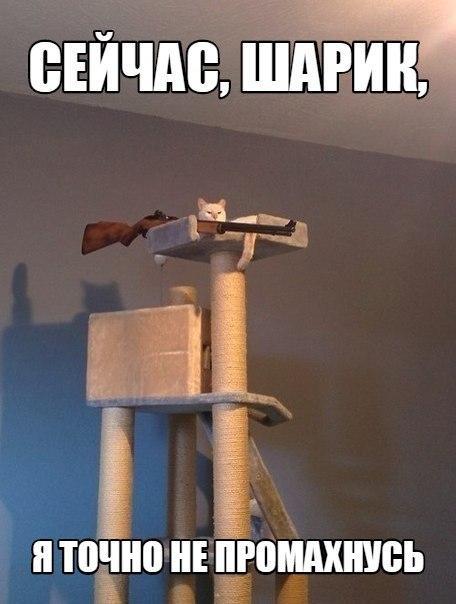 Смешные картинки про котов с надписями - веселая нарезка 7