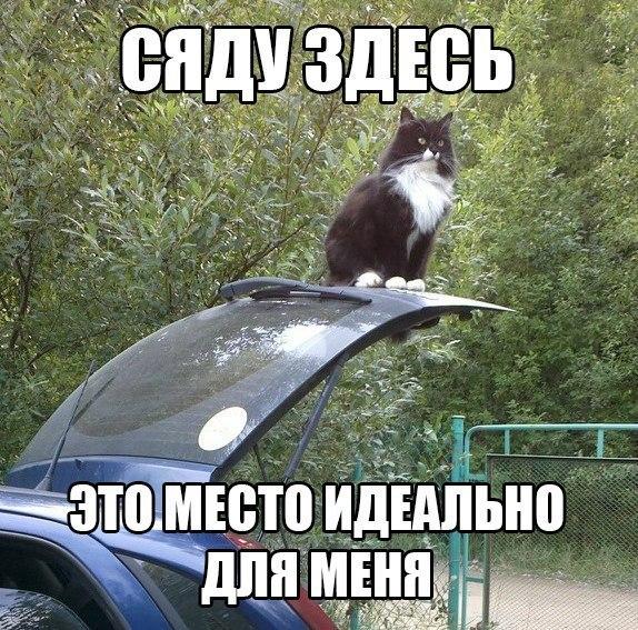 Смешные картинки про котов с надписями - веселая нарезка 9