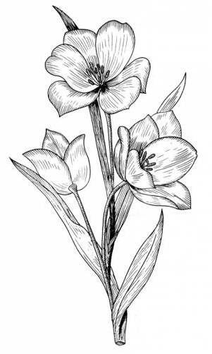 Цветные рисунки цветов для срисовки - красивая подборка 1