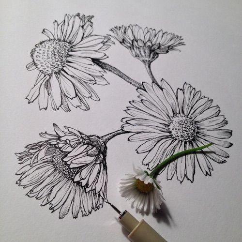 Цветные рисунки цветов для срисовки - красивая подборка 17