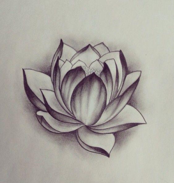 Цветные рисунки цветов для срисовки - красивая подборка 8