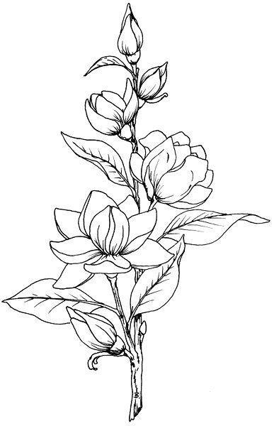 Цветные рисунки цветов для срисовки - красивая подборка 9