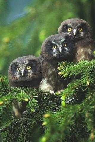 Красивые и прикольные картинки птиц на заставку телефона - сборка 1