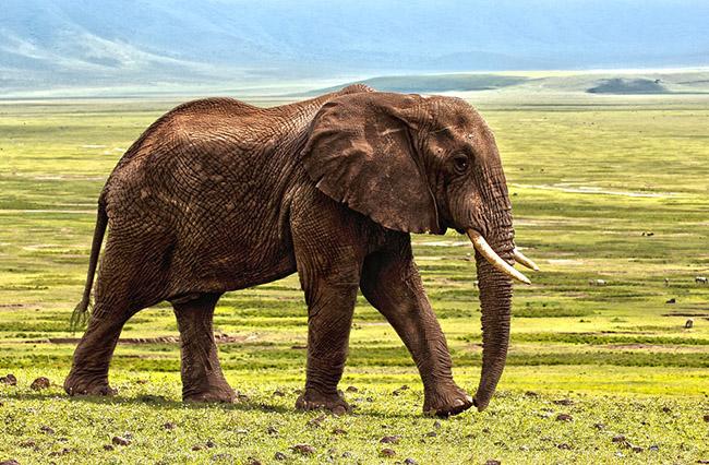 Фото, картинки про животных - самые красивые и прикольные 1