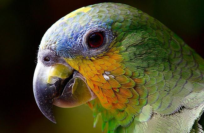 Фото, картинки про животных - самые красивые и прикольные 13