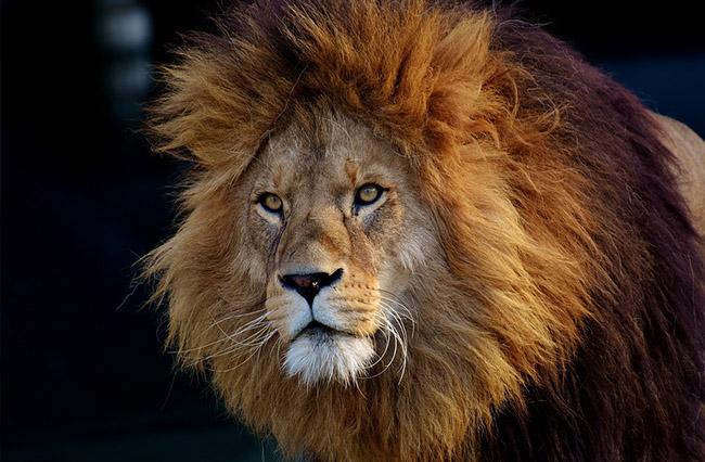 Фото, картинки про животных - самые красивые и прикольные 14
