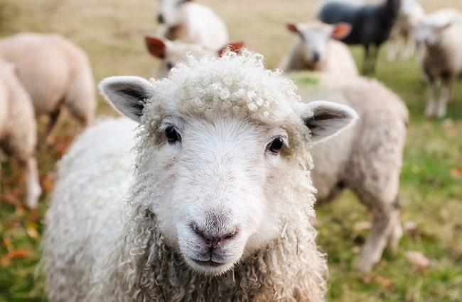 Фото, картинки про животных - самые красивые и прикольные 2