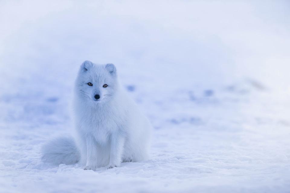 Фото, картинки про животных - самые красивые и прикольные 20