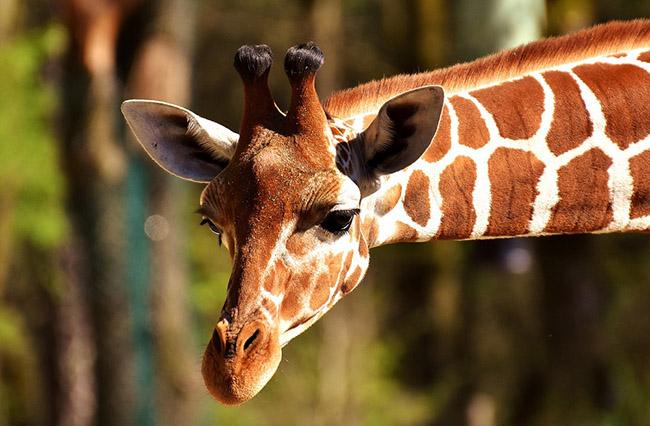 Фото, картинки про животных - самые красивые и прикольные 22