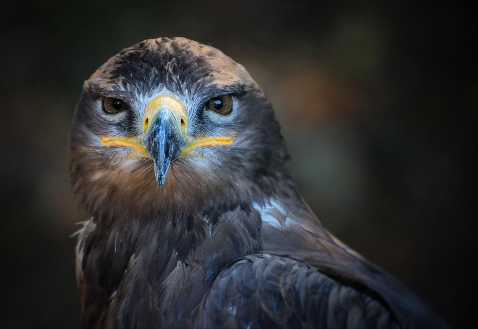 Фото, картинки про животных - самые красивые и прикольные 23