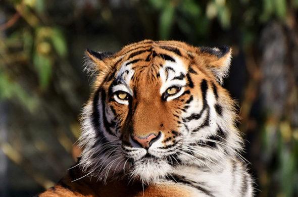 Фото, картинки про животных - самые красивые и прикольные 24