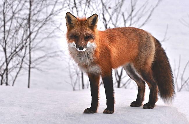Фото, картинки про животных - самые красивые и прикольные 7