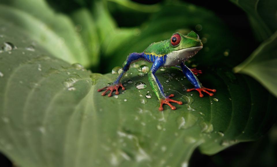 Фото, картинки про животных - самые красивые и прикольные 8